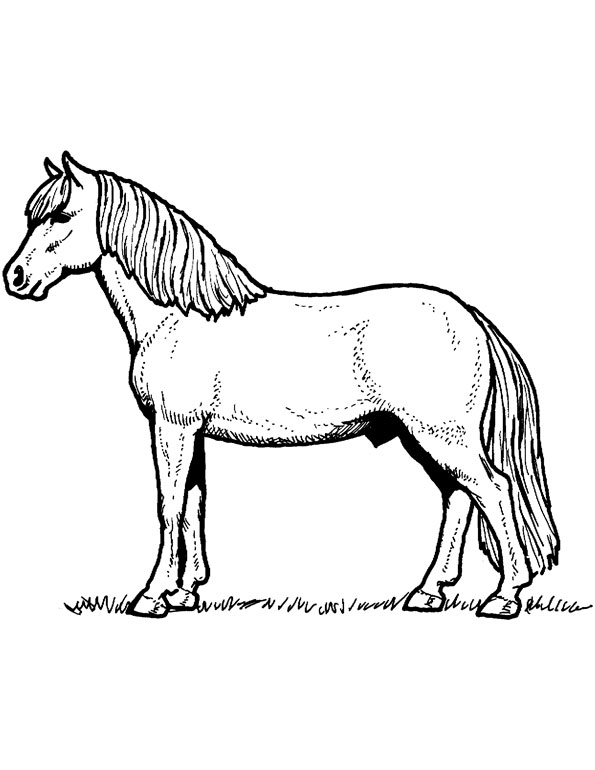 horse coloring website